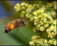 Bahar, arıları telef etti